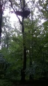 Hambacher Forst, Baumbesetzung.