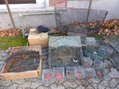die-fallensammlung-des-vogelfaengers-c-komitee-gegen-den-vogelmord